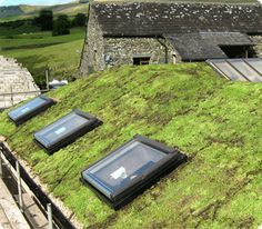 Sedum is an ideal material for an eco-friendly roof that looks good, insulates and reduces water run-off. Green roofs, or living roofs, using our sedum plants are the future of eco-friendly homes. Sedum Roof, Sedum Plant, Living Roofs, Roofing Services, Barnsley, South Yorkshire, Small Buildings, Eco Friendly House, Plant Wall