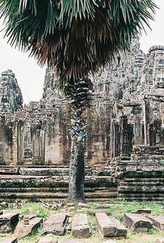 Angkor Wat Archaeological Park, Cambodia shot by Jean-Baptiste Petitpas, via Wilder Quarterly