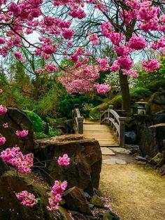 Stunning Japanese garden