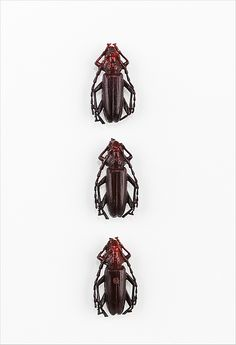 ❂ Beetle Buttons by Elsa Schiaparelli, 1938. ❂ It would freak me out to see someone with these buttoning up their coat.