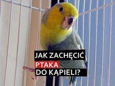 Jak zachęcić ptaka do kąpieli?