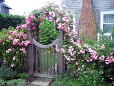 arbor gate with roses