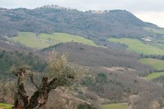 A view of the Italian countryside from #CastellodiCasole #Italy #Tuscany  (Photo Credit: A. Bartholomew)
