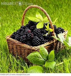 Delicious fresh picked blackberries.