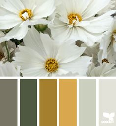 flora tones                                                                                                                                                     More
