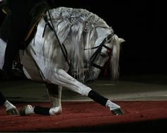 bowing horse | Flickr - Photo Sharing!
