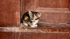 What to Do with a Stray Cat: Most people have encountered a stray cat 3 times in their life. It… #Cat_Care #cat_care #feral #food #homeless