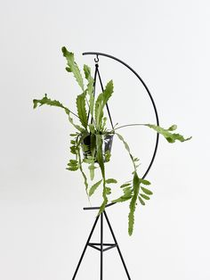 Crescent Stand | Capra Designs A minimal design created using powder coated steel rod.