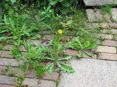 Leuk zuinig !: Joepie, het is lente.... maar mijn tuin ziet er ni...