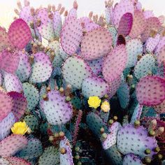 Close up of colorful cacti by danielkimphoto | Stocksy United