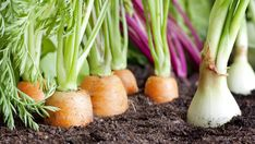 10 Healing superfoods you can easily grow in your garden
