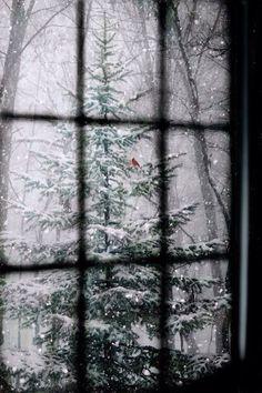 iPhone 5 Wallpaper Christmas Tree Snow