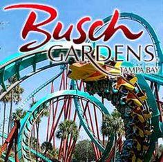 50 Most Popular Tourist Attractions In The World - Busch Gardens, Tampa Bay, FL, USA. Overflow Cafe Amazing must have perfect place to go they even have a place for the little ones Clearwater Florida, Sarasota Florida, Florida Girl, Florida Vacation, Florida Travel, Vacation Spots, Beach Travel, Kissimmee Florida, Florida Usa