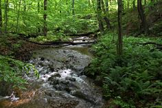 Summertime view of a trout stream near Catoctin Mountain Park. Photo by Kai Hagen Photography.
