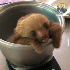 Baby Animals Pictures, Cute Animal Videos, Cute Animal Pictures, Baby Animals Super Cute, Cute Little Animals, Cute Funny Animals, Cute Baby Sloths, Cute Sloth, Baby Sloth Video