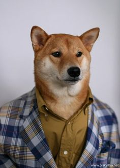 Dog's Guide to Being a Man » Biskvitka.net This could have been my hachi, all grown up