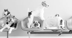 Vetiquette!? - Dog Pet Magazines in Westchester County NY, Fairfield County CT, New York City, and Long Island, USA by THE PET GAZETTE. What NOT To Do In Your Vet's Waiting Room?