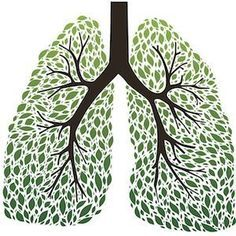 The 9 Best Herbs for Lung Cleansing and Respiratory Support  Your respiratory system is constantly working. All day, every day, it is the vehicle for oxygen to enter your body. Unfortunately, it can also be an entry point for pollutants, irritants, toxins