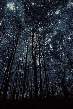 imagenes de bosques hermosos de noche