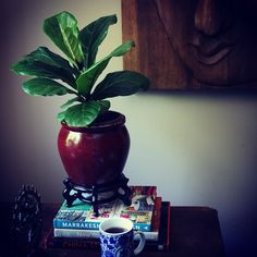 Photo by apartmentf15, fiddle leaf fig tree