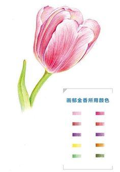 Как нарисовать тюльпан акварельными карандашами поэтапно?