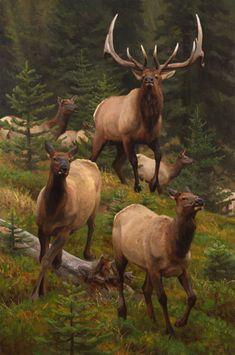 Wildlife Paintings, Wildlife Art, Cow Elk, Elk Pictures, Bull Elk, Elks, Elk Hunting, Rock Painting Designs, Southwest Art