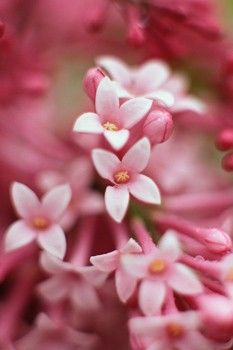 different types of flowers Different Types Of Flowers, Unusual Plants, Planting Flowers, Amazing, Nature, Gardening, Beautiful, Naturaleza, Lawn And Garden