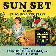 Sun Set Citrus Fruits. #crateart.jpg