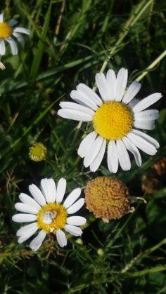flower - Hungary - Hortobágy