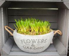 Planter Pots, Spring, Garden, Flowers, Garten, Lawn And Garden, Gardens, Gardening, Royal Icing Flowers