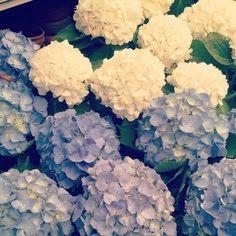 hydrangea love. | The Style Skinny