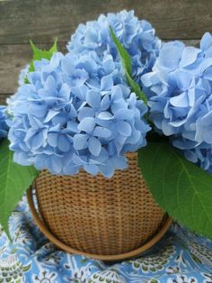 Blue Hydrangea in a gorgeous Nantucket Basket Very Beautiful Flowers, Amazing Flowers, Pretty Flowers, Beautiful Gardens, Nice Flower, Hydrangea Care, Hydrangea Flower, Types Of Flowers, Flower Wallpaper