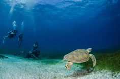 Bonaire - The Southern Caribbean island of ABC Islands: Aruba, Bonaire and Curaçao. Tamarindo, Southern Caribbean Islands, Tulum, Cool Places To Visit, Places To Travel, Oaxaca City, Water Animals, Gulf Of Mexico, Mexico Travel