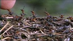Joukkomönkiäiset. Useat hyönteiset elävät yhdyskunnissa. Kertoja: Mari Pöllänen. Food, Essen, Meals, Yemek, Eten