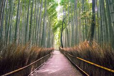 Arashiyama Bamboo Grove was a lot smaller than we thought, but we still really enjoyed it. You can take some excellent photos here