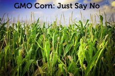Reading Food Labels: How to Avoid GMO Corn