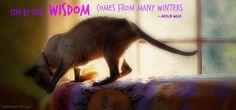 merlin-old cat-wisdom-quote
