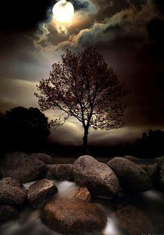 árvore e lua