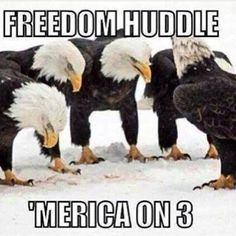 .Freedom Huddle