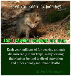 PLEASE SIGN & SHARETHE PETITION: http://www.antifursocietyinternational.org/petitions/fur-trapping-in-usa/petition.php -- MORE>>> http://www.antifursociety.org/Bloodsport_in_the_United_States.html