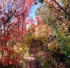 One of my favorite photos taken in Park City, Utah during a mountain bike trail ride in the Fall. :)