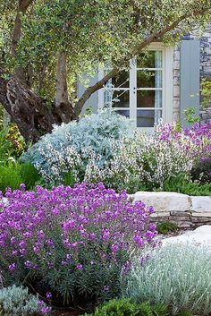 Beautiful mediterranean planting