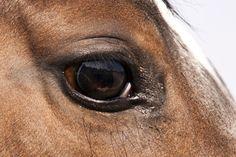 los ojos de caballo
