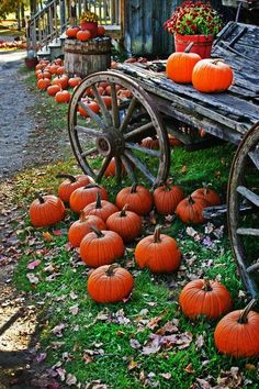 """SAMHAIN - (pronounced sow-in), marking the end of the harvest season and the beginning of winter or the """"darker half"""" of the year. It is celebrated from sunset on 31 October to sunset on 1 November"""