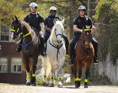 Birmingham Police Department mounted police - one horse has reflective cheekpieces. - Police Horse Tack