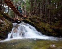 Skagway Grizzly Falls Ziplining Adventure