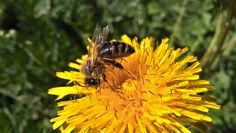 Bee by Juraj Blažo on tookapic Photo Journal, Bee, Photo Diary, Honey Bees, Bees