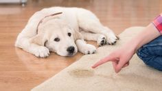 A guide to the most important factors in successfully potty training a puppy. Includes tips on scheduling, crates, potty locations, and products that can help.