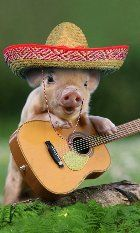 Pig plays the guitar and sings
