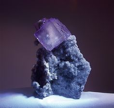 Fluorite,Calcite..Buried Treasure (a beautiful purple Fluorite crystal on a bed of sparkling Calcite crystals over a Limestone matrix).